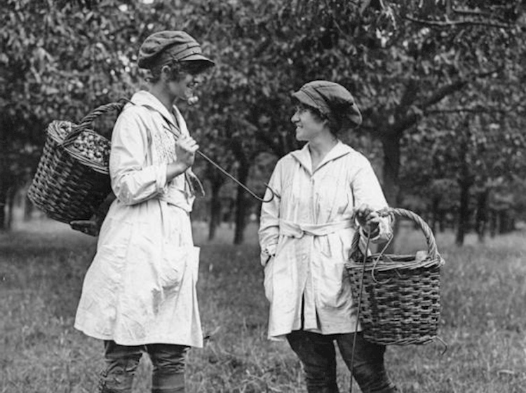 agriculture_in_britain_during_the_first_world_war_female_fruit_pickers