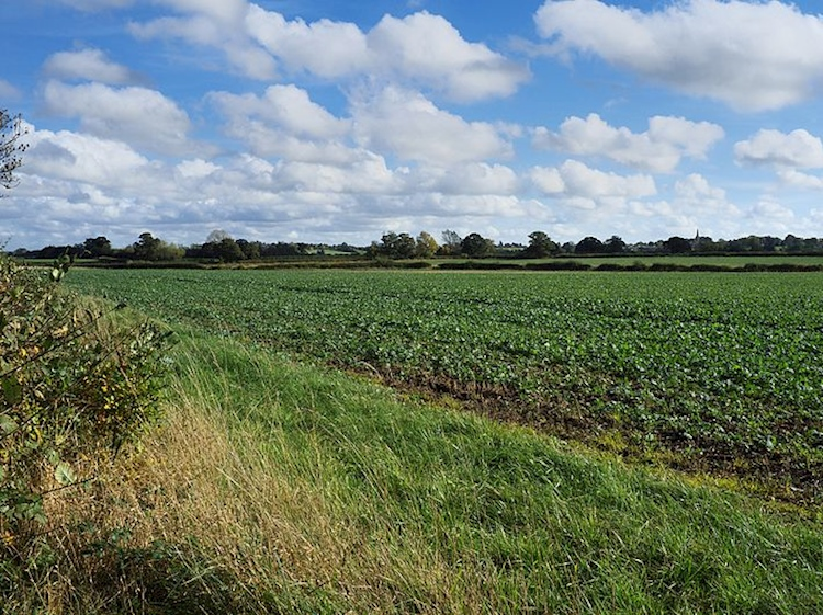 looking_across_the_fields_of_fenn_lane_farm_the_site_of_the_battle_of_bosworth