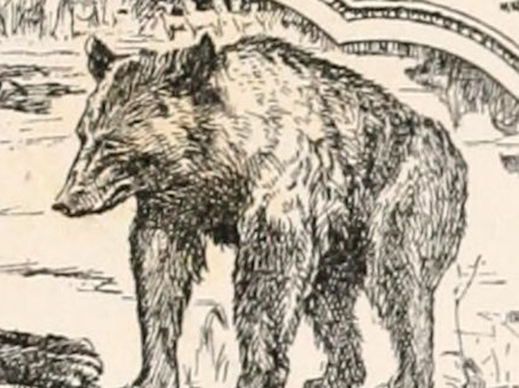 baloo_depicted_in_the_1895_edition_of_rudyard_kiplings_the_second_jungle_book