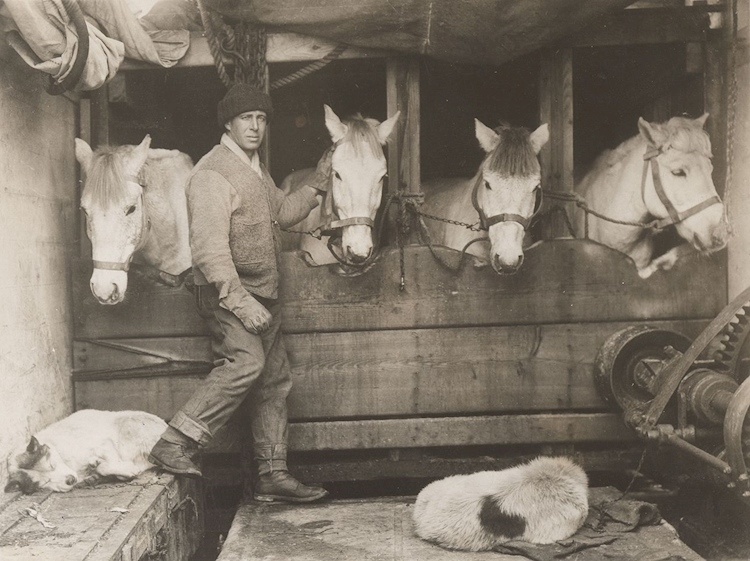 lawrence_oates_tending_to_horses_during_terra_nova_expedition