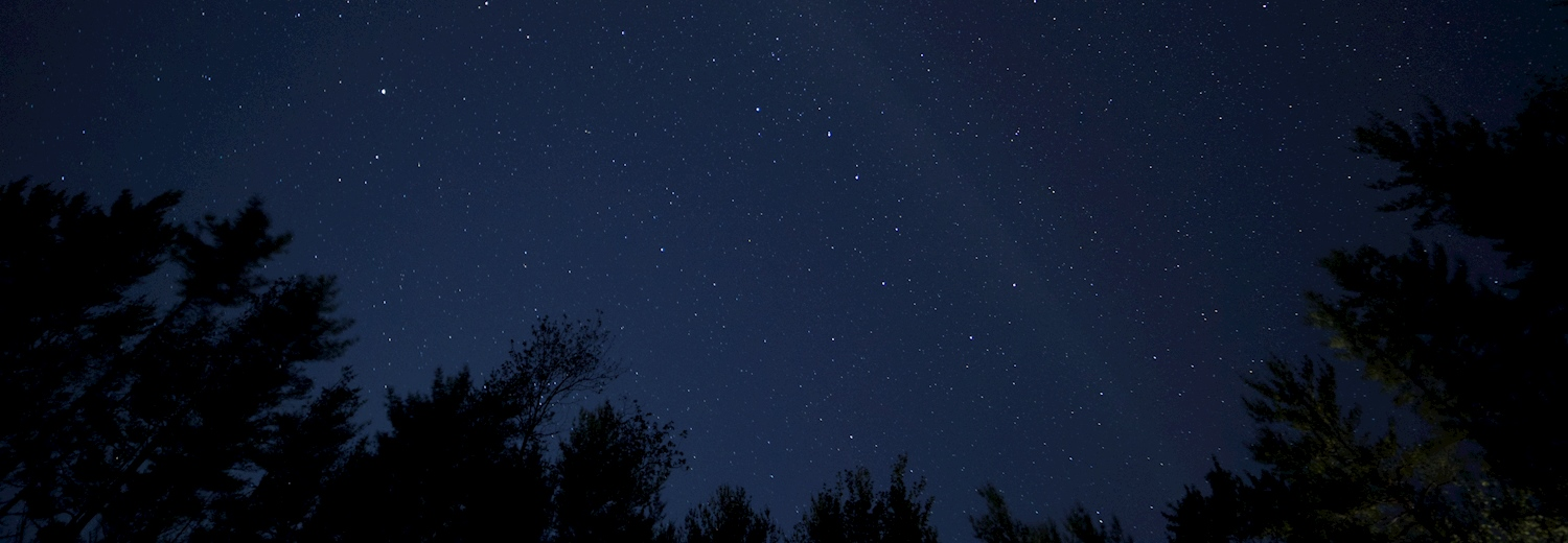 night_sky_trees_photo