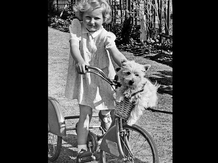 dog_in_girls_bicycle_basket
