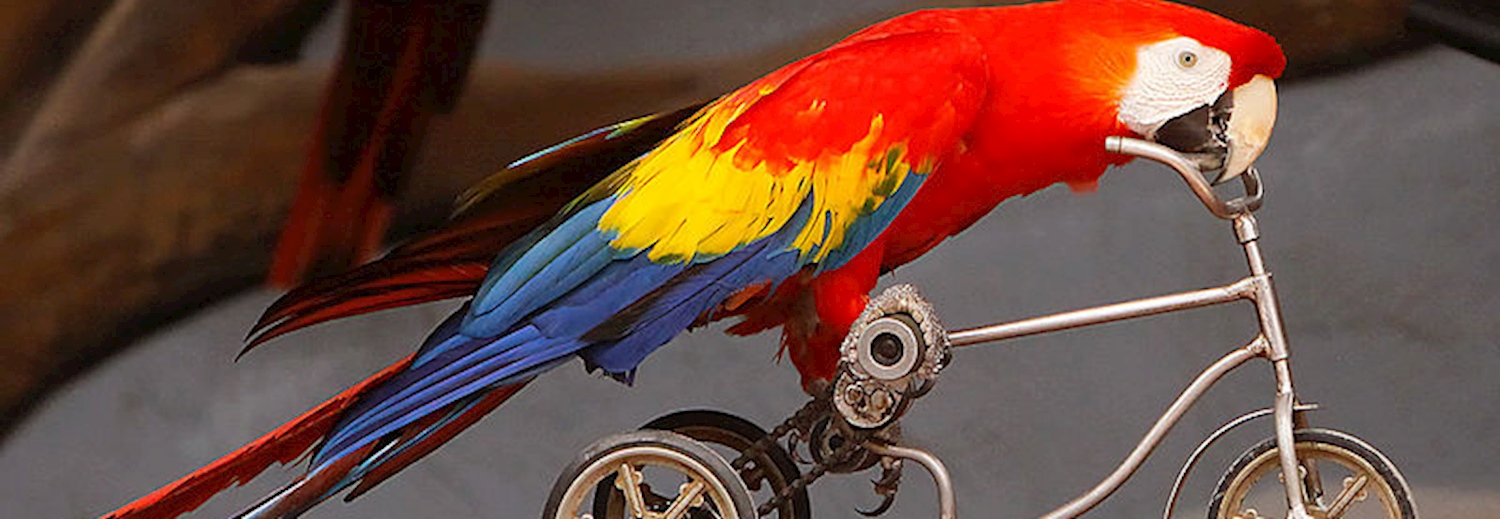 parrot_riding_a_micro_bicycle