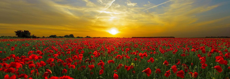 The history press the poppy as a symbol of remembrance poppyfieldsunset mightylinksfo