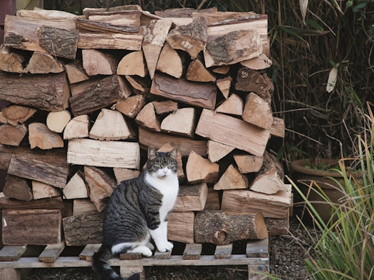 cat_with_logs