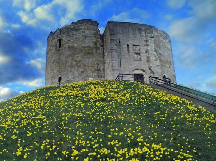 cliffords_tower_york_with_daffodils