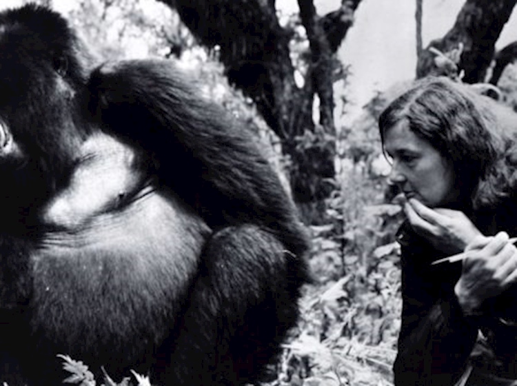 dian_fossey_and_digit